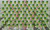 IM_GEOseed Diamond Pattern_0002.jpg