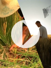 The Future of Farming corporate video 2020_8